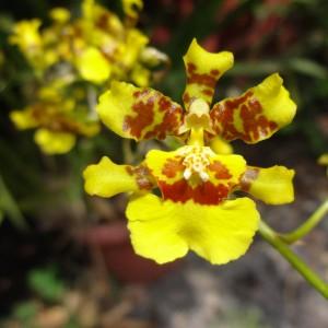 orquidea_8