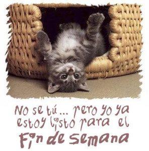 feliz fin de semana gato peresozo